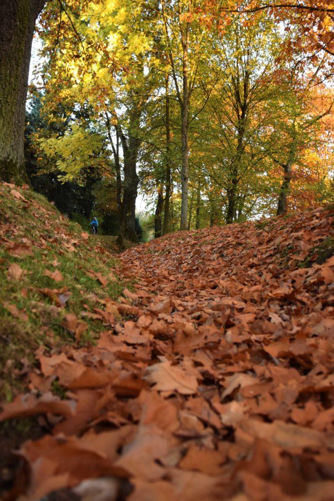 Herbst mit Kindern - Laub rascheln