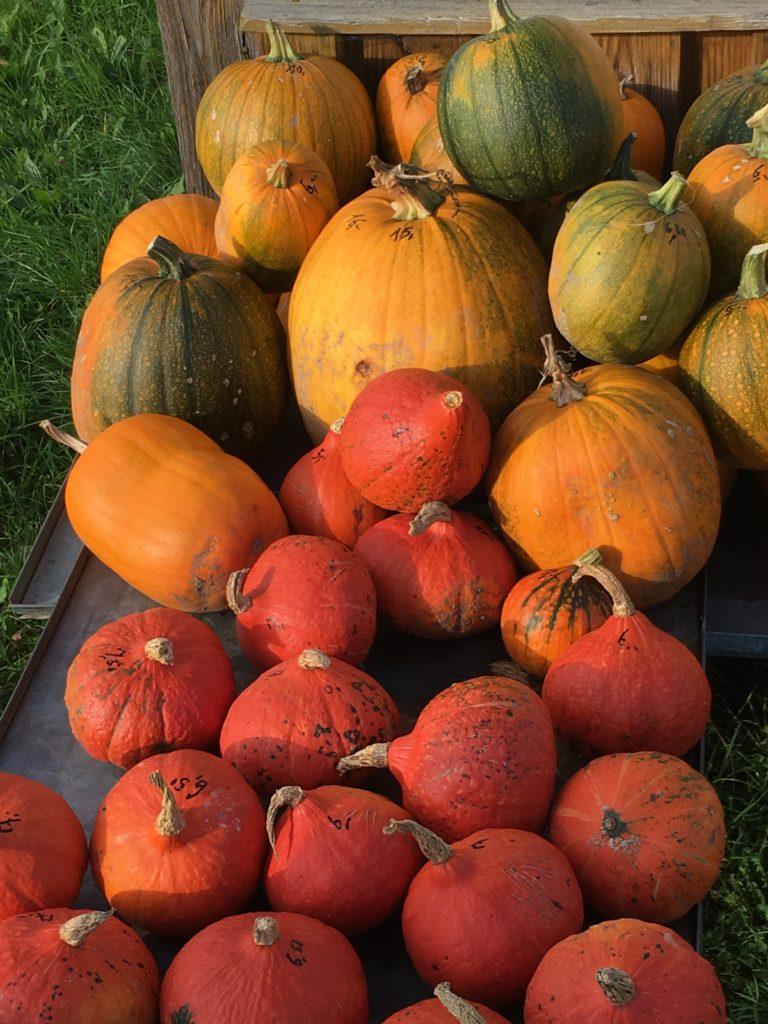 Herbst mit Kindern - Kürbissuppe