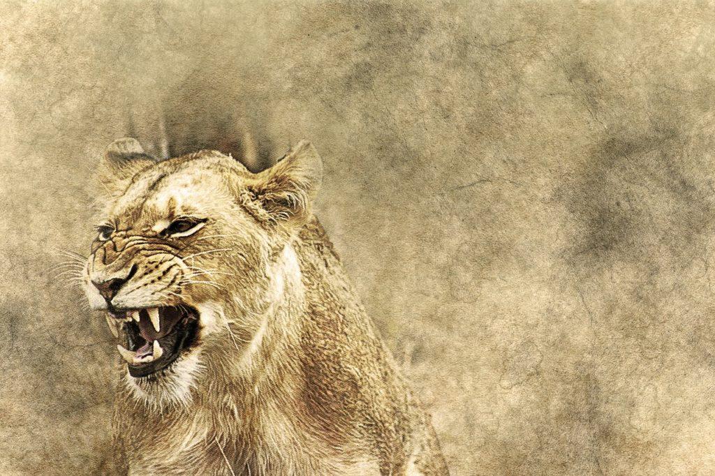 Mutterliebe Löwin