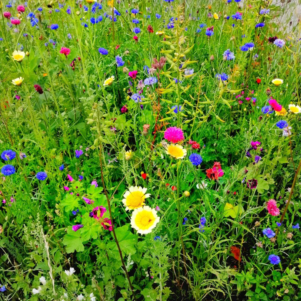 Blumenwiese mit bunten Blumen Achtsamkeitsübungen