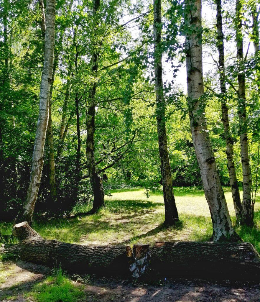 Selbstliebe Mantras für Mamas - Wald und starke Bäume